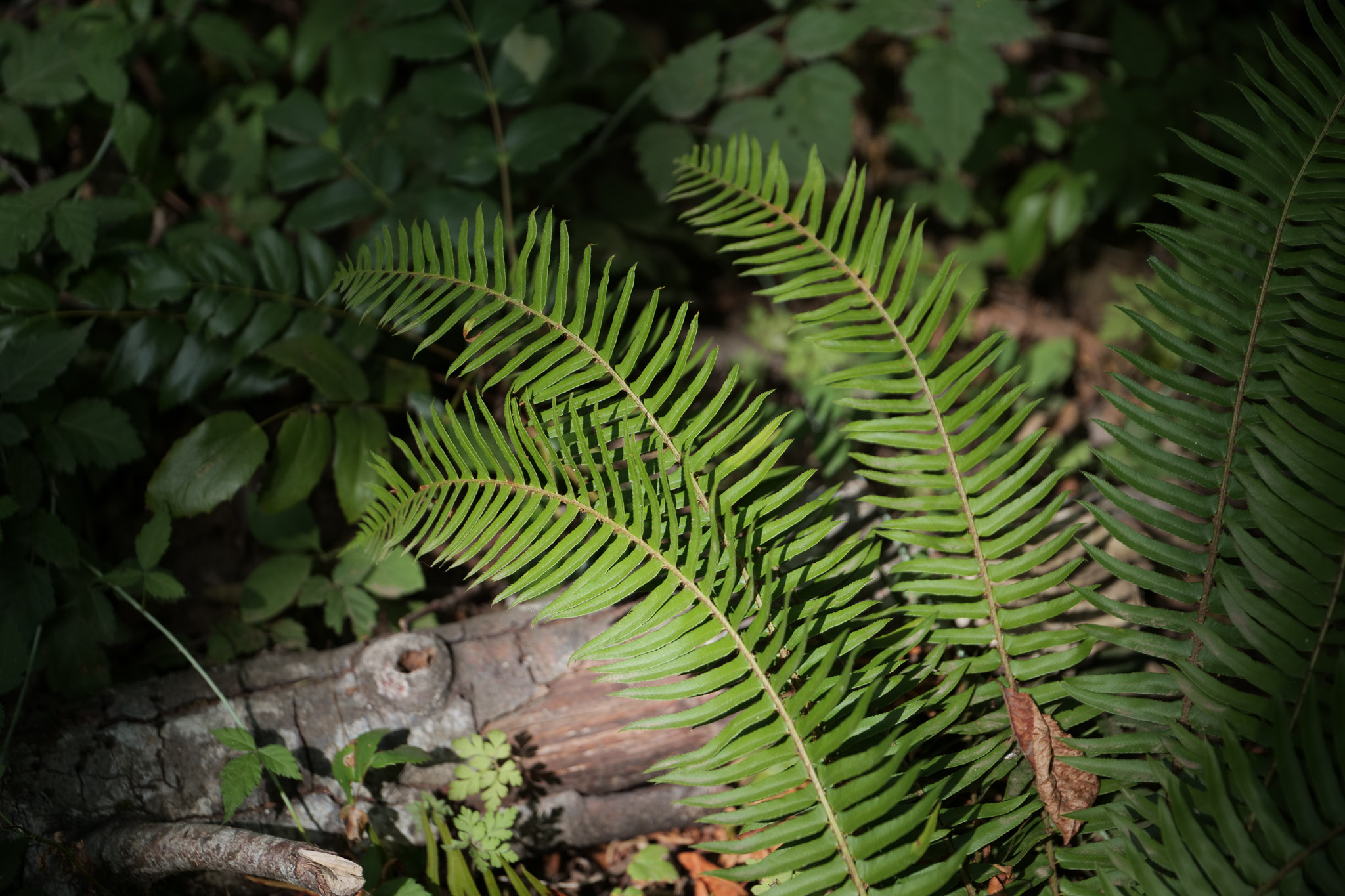 Photo of fern with dramatic lighting shot with Panasonic Lumix S5