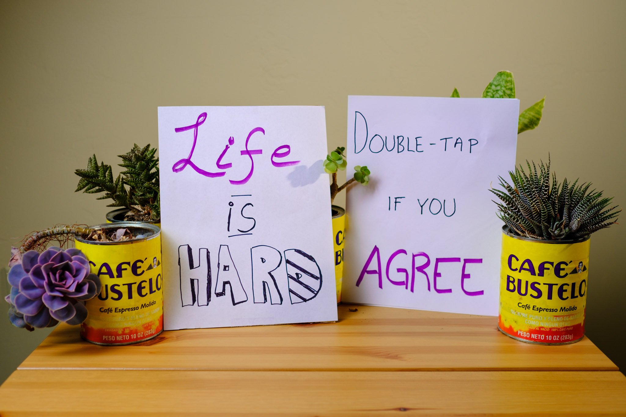 A collection of house plants in coffee cans are holding up two signs that read